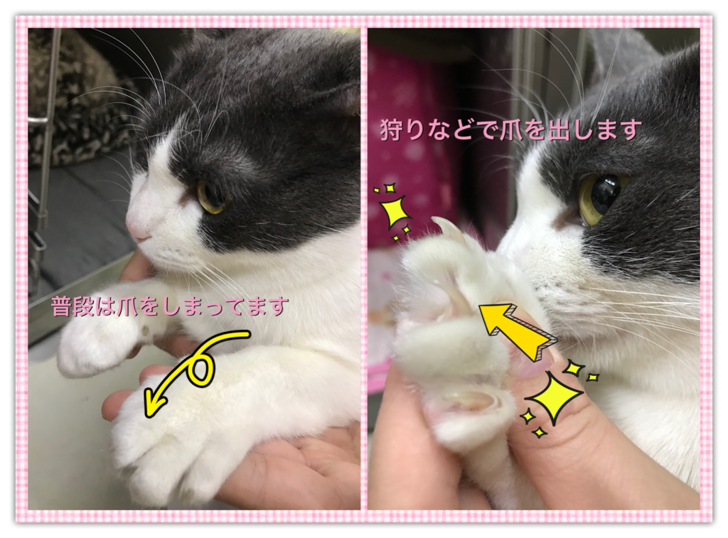 f:id:nozawa_clinic:20161220113339p:plain