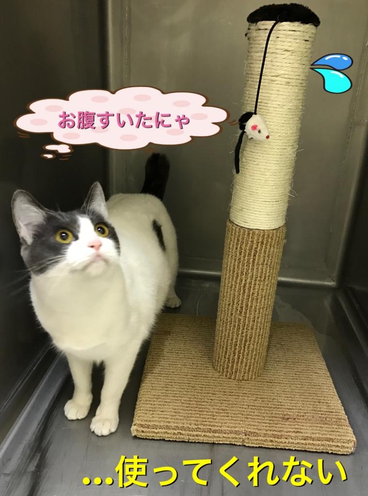 f:id:nozawa_clinic:20161220183549j:plain