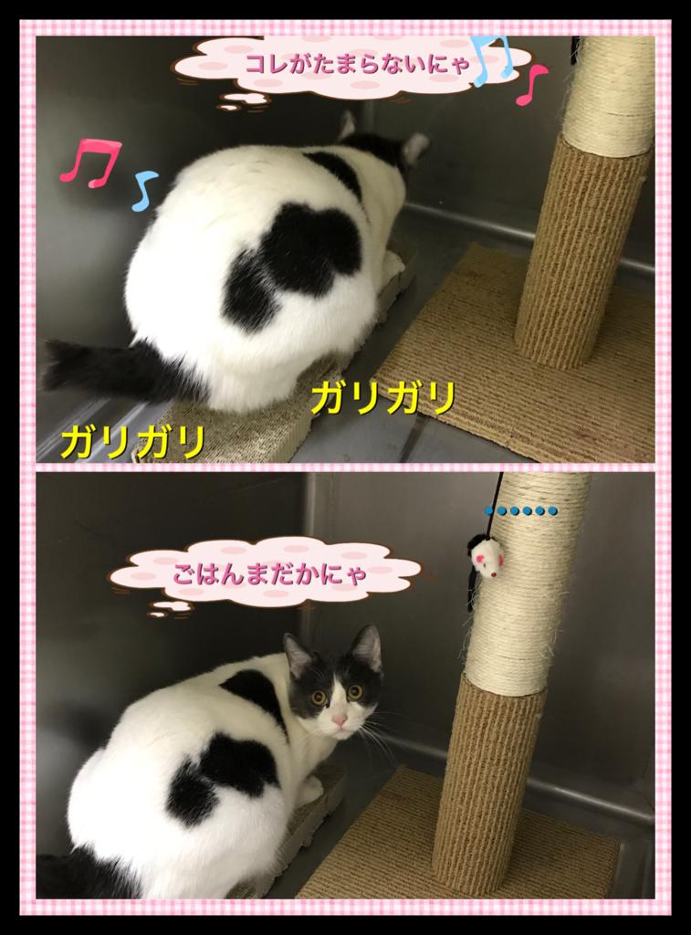 f:id:nozawa_clinic:20161220184351p:plain