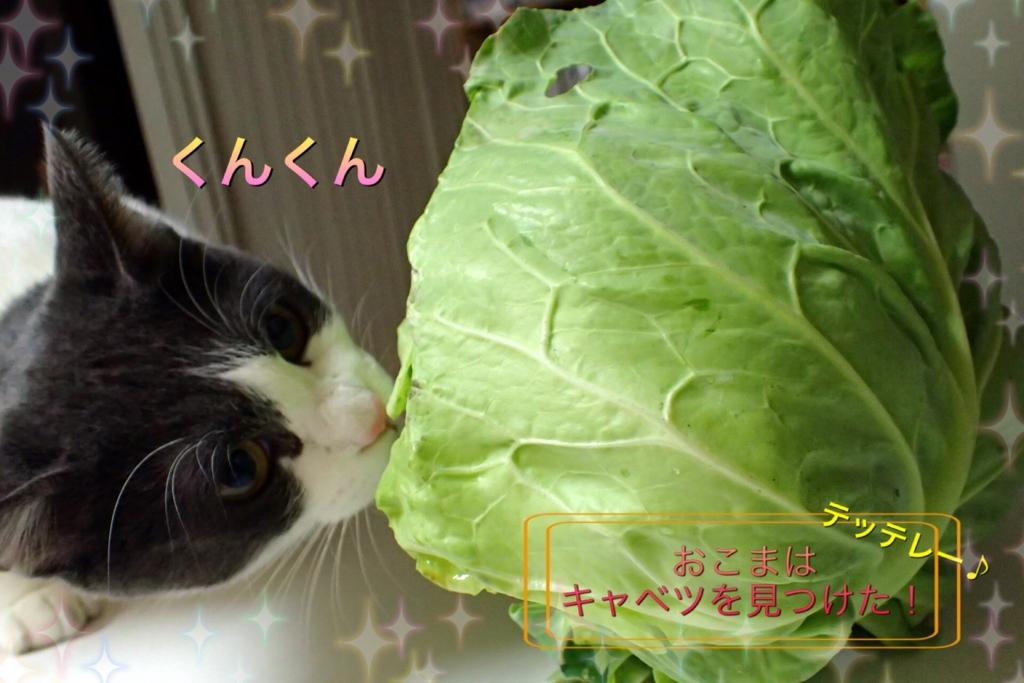 f:id:nozawa_clinic:20170131095832j:plain