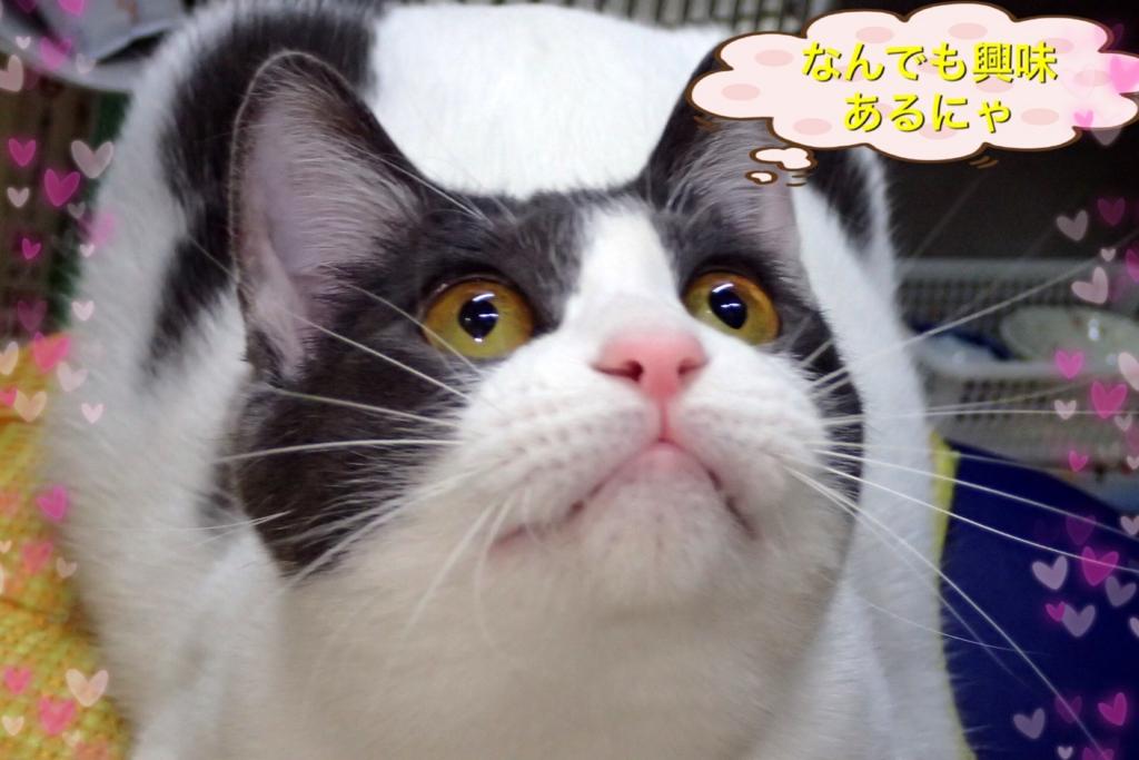 f:id:nozawa_clinic:20170131100847j:plain
