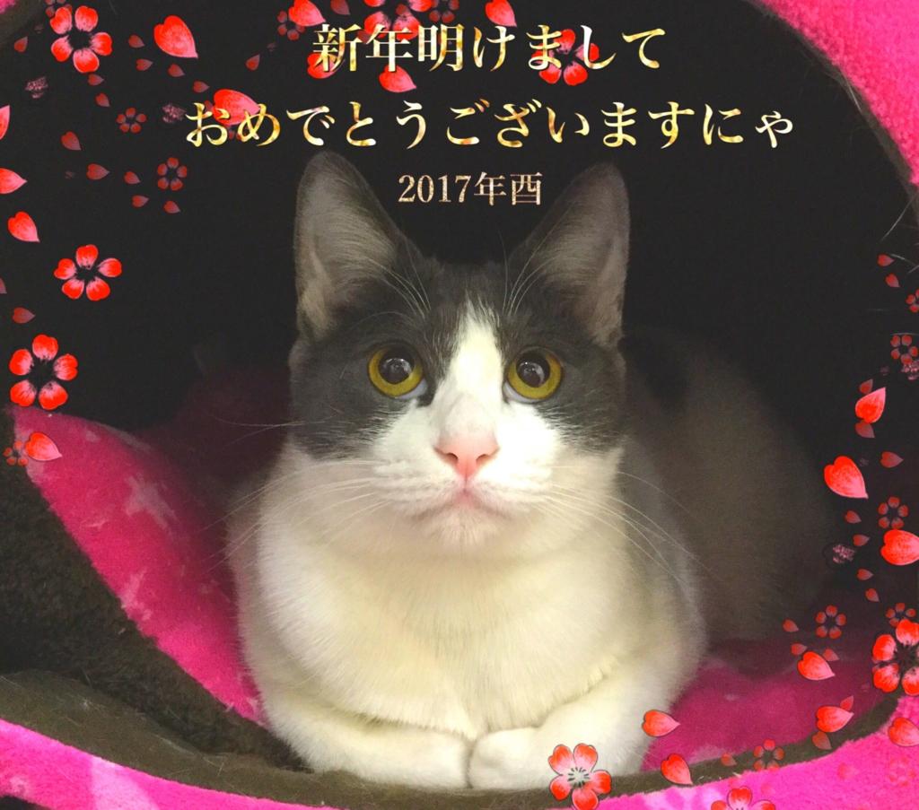 f:id:nozawa_clinic:20170209124216j:plain