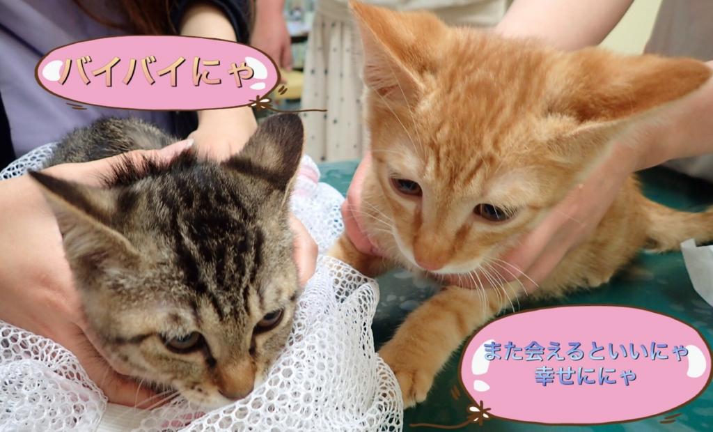 f:id:nozawa_clinic:20170524104514j:plain