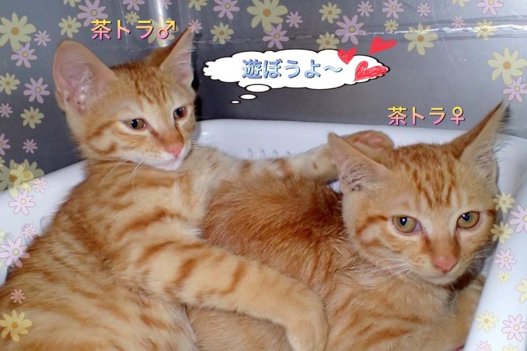 f:id:nozawa_clinic:20170525111409j:plain