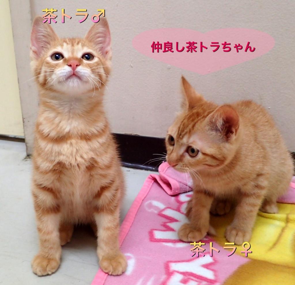 f:id:nozawa_clinic:20170525112541j:plain