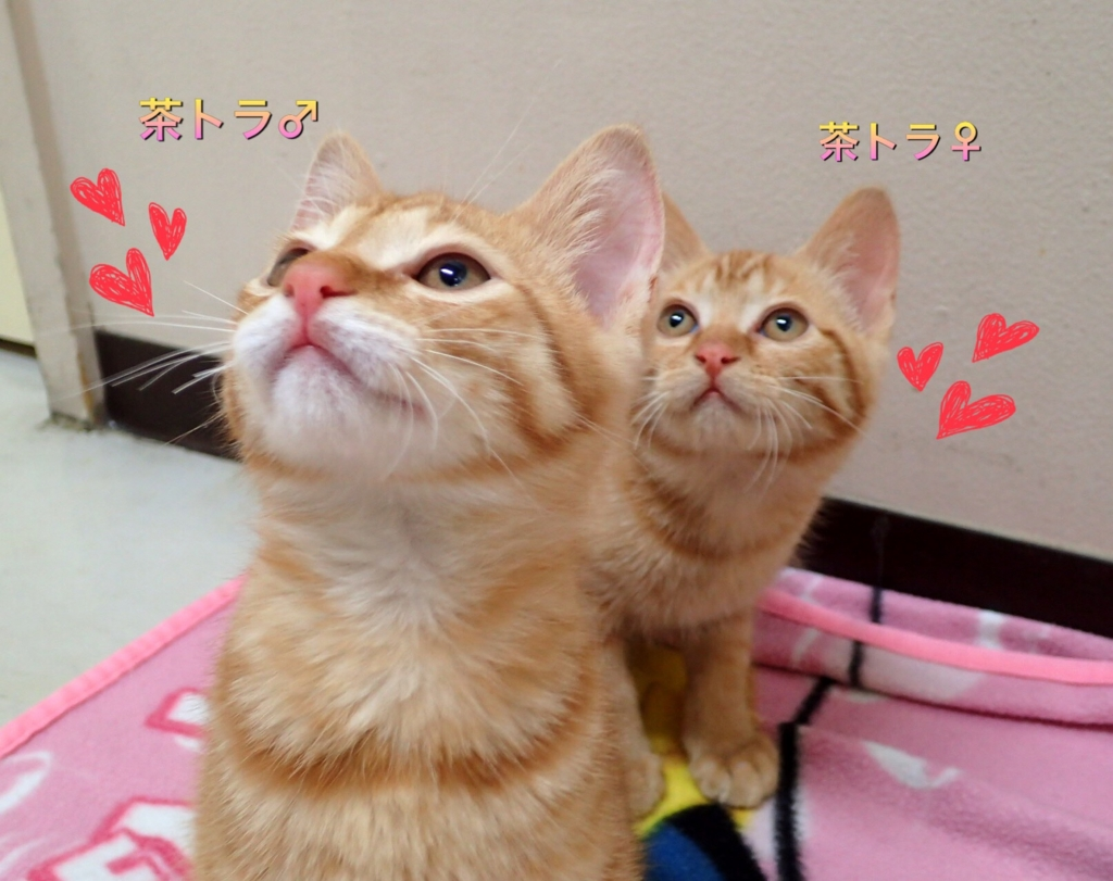 f:id:nozawa_clinic:20170525113413j:plain