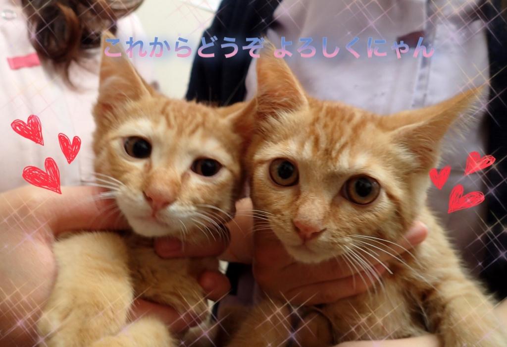 f:id:nozawa_clinic:20170526185832j:plain