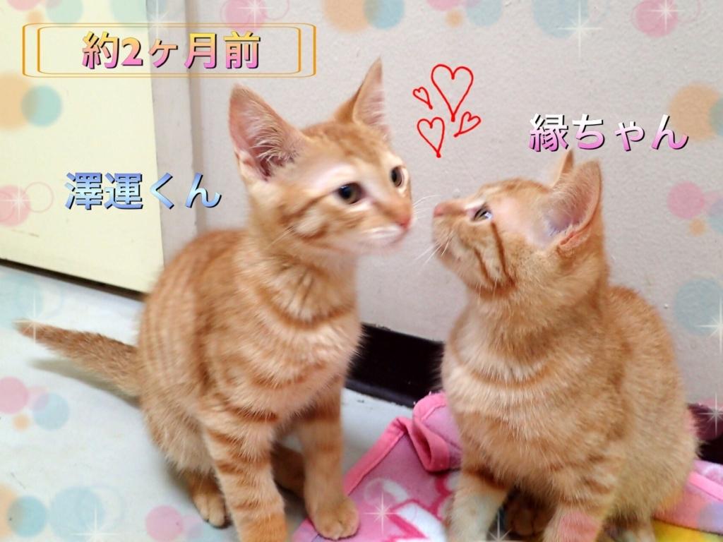 f:id:nozawa_clinic:20170718181718j:plain