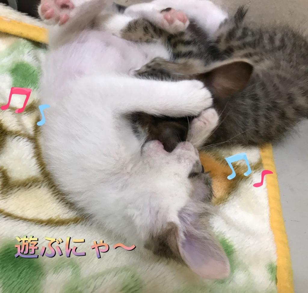f:id:nozawa_clinic:20170728181251j:plain