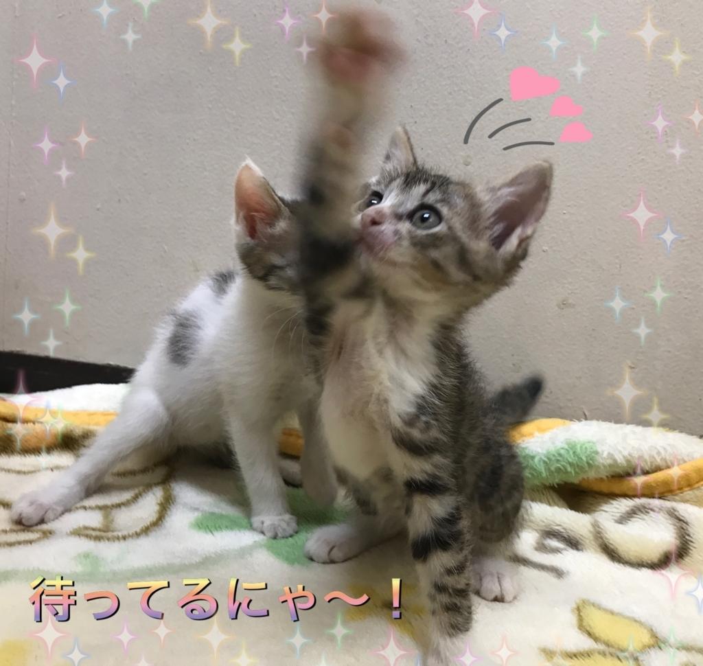 f:id:nozawa_clinic:20170728182130j:plain