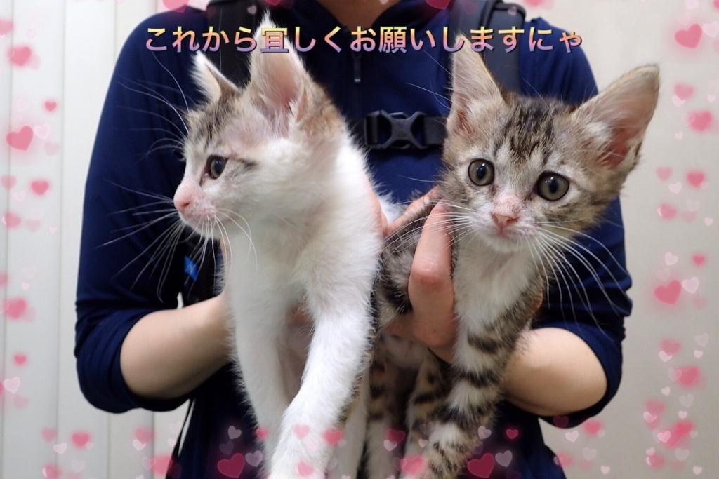 f:id:nozawa_clinic:20170729181334j:plain