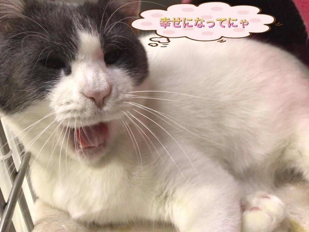 f:id:nozawa_clinic:20170803113254j:plain