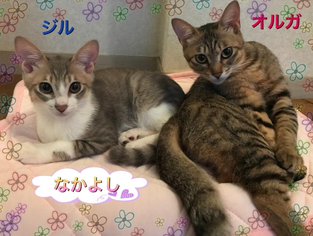 f:id:nozawa_clinic:20170831183420j:plain