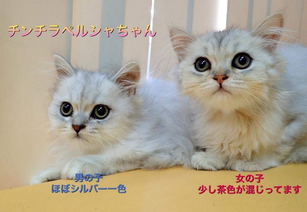 f:id:nozawa_clinic:20170913115536j:plain