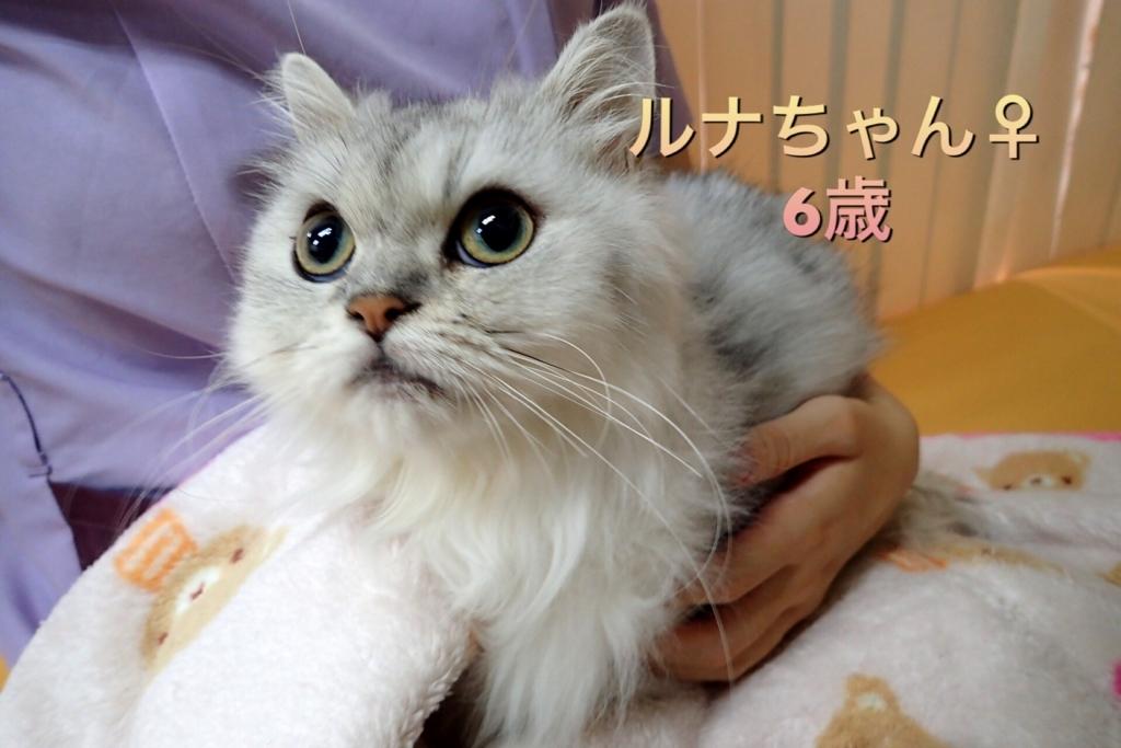 f:id:nozawa_clinic:20170915121815j:plain