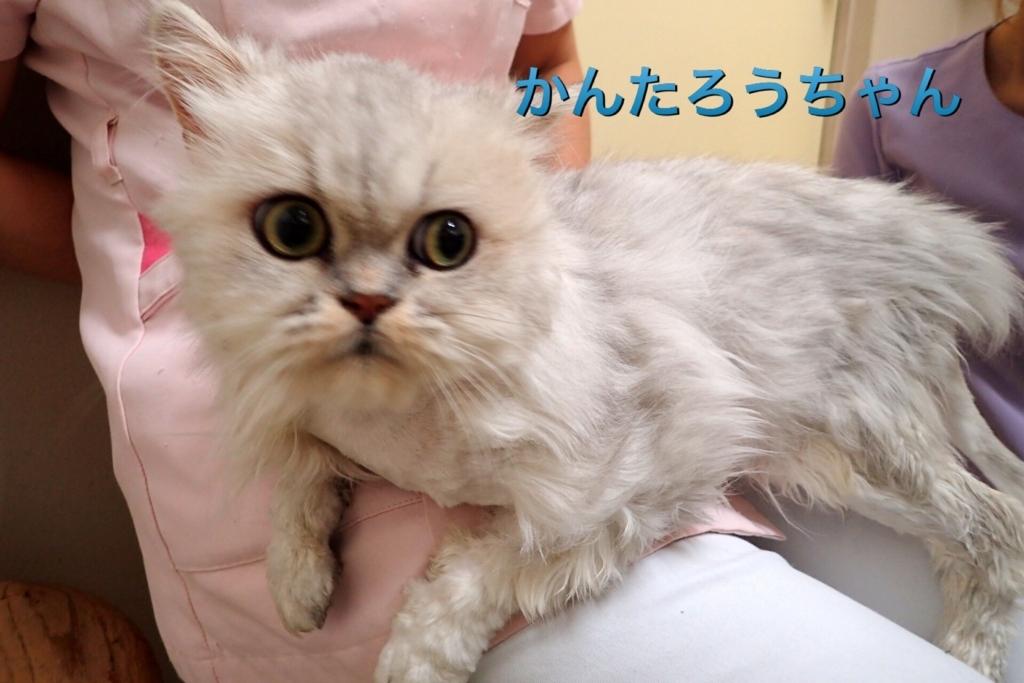 f:id:nozawa_clinic:20170919103708j:plain