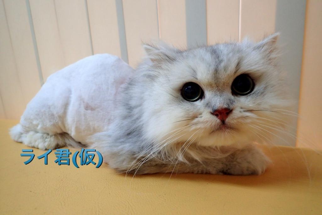 f:id:nozawa_clinic:20170919111537j:plain