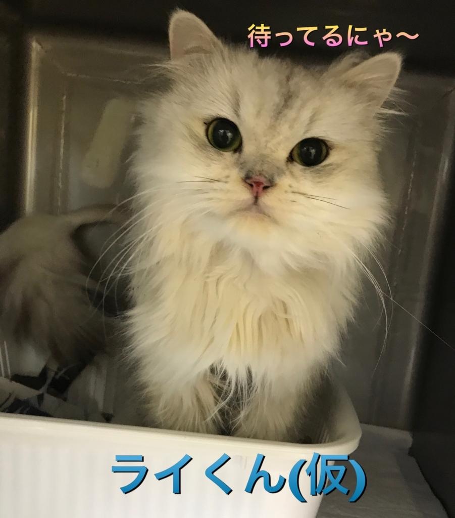 f:id:nozawa_clinic:20170921173558j:plain