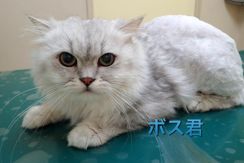 f:id:nozawa_clinic:20170921174930j:plain