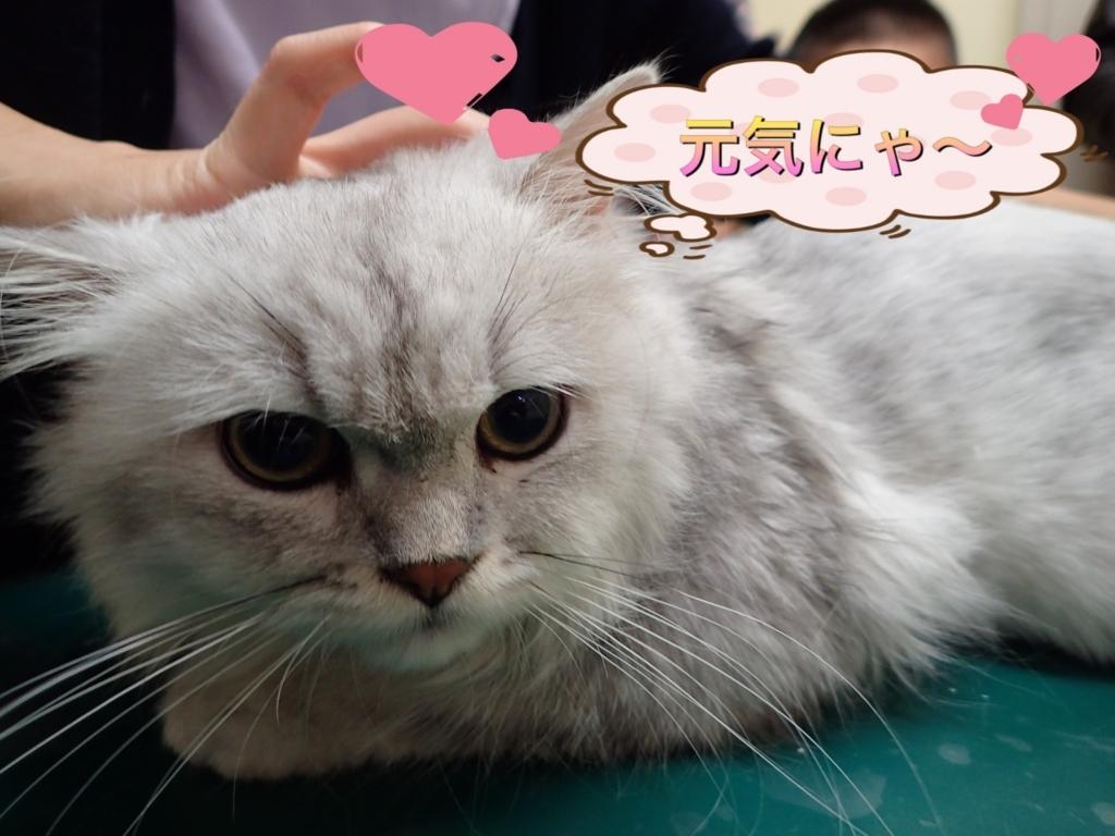 f:id:nozawa_clinic:20171019114854j:plain