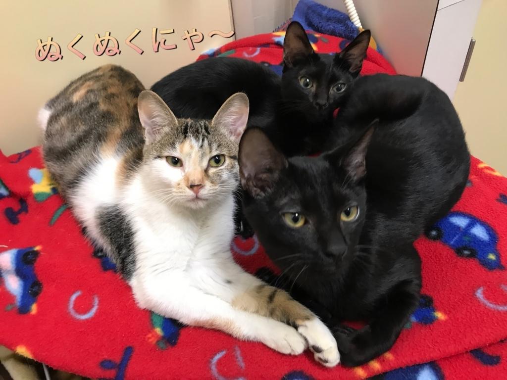 f:id:nozawa_clinic:20171031154105j:plain