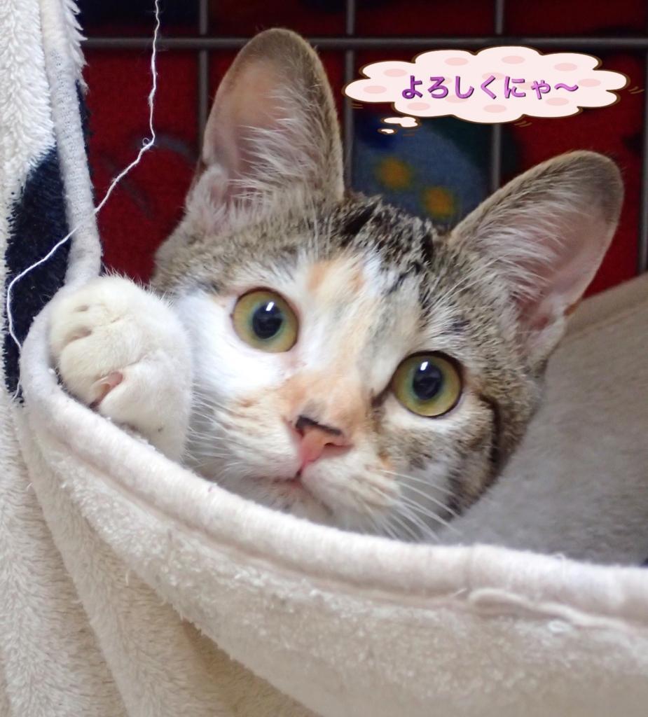 f:id:nozawa_clinic:20171110101938j:plain