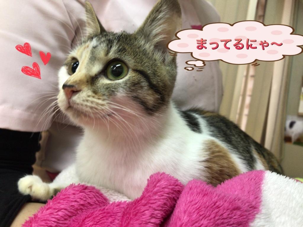 f:id:nozawa_clinic:20171120161357j:plain