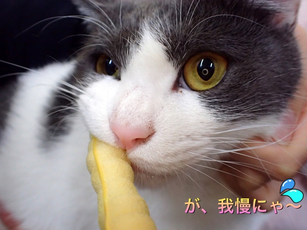 f:id:nozawa_clinic:20171212110648j:plain