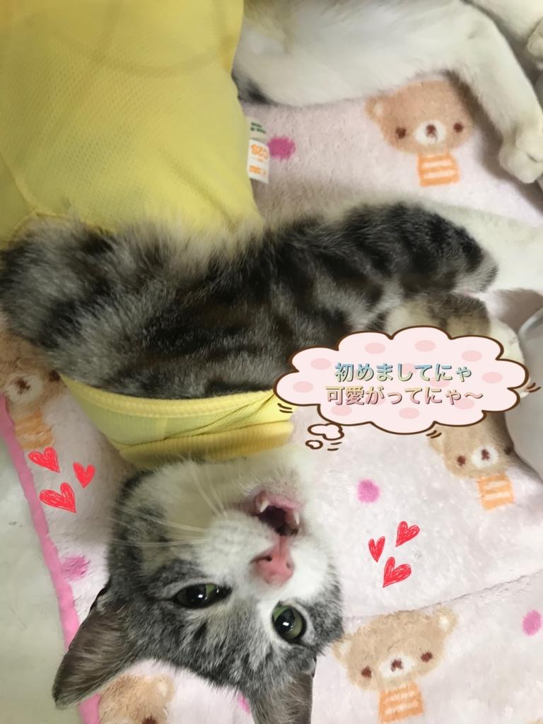 f:id:nozawa_clinic:20180216111557j:plain
