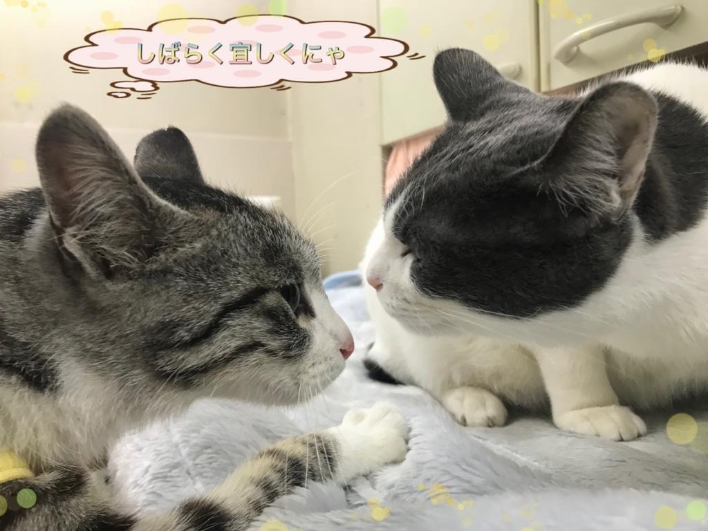 f:id:nozawa_clinic:20180216112023j:plain