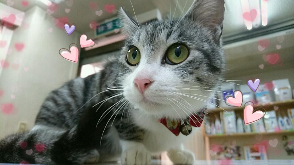 f:id:nozawa_clinic:20180315111712j:plain