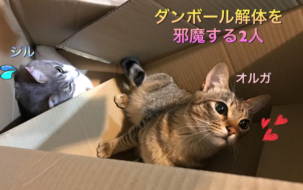 f:id:nozawa_clinic:20180315155901j:plain