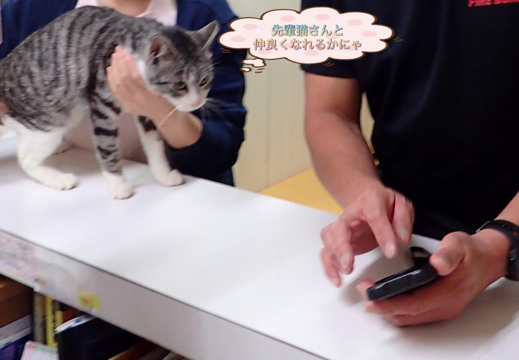 f:id:nozawa_clinic:20180317102240j:plain