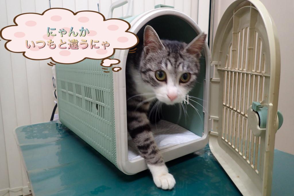 f:id:nozawa_clinic:20180317102812j:plain