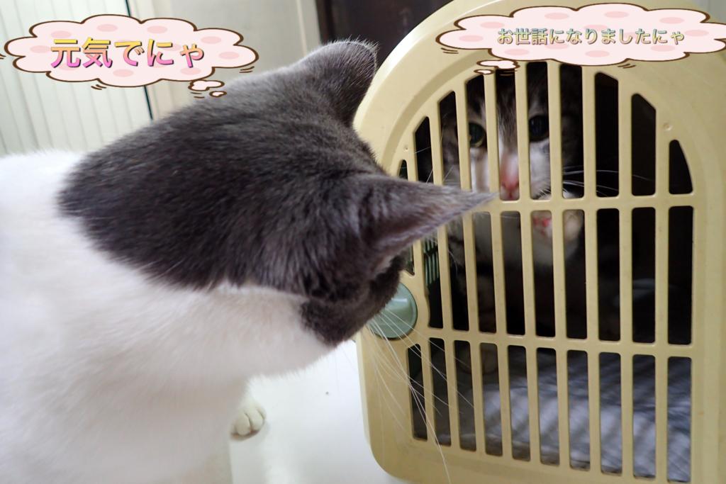 f:id:nozawa_clinic:20180317172320j:plain