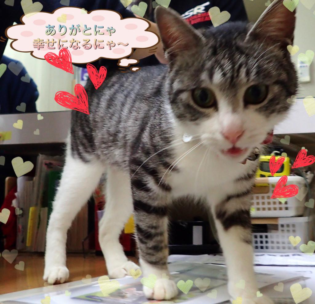 f:id:nozawa_clinic:20180317175052j:plain