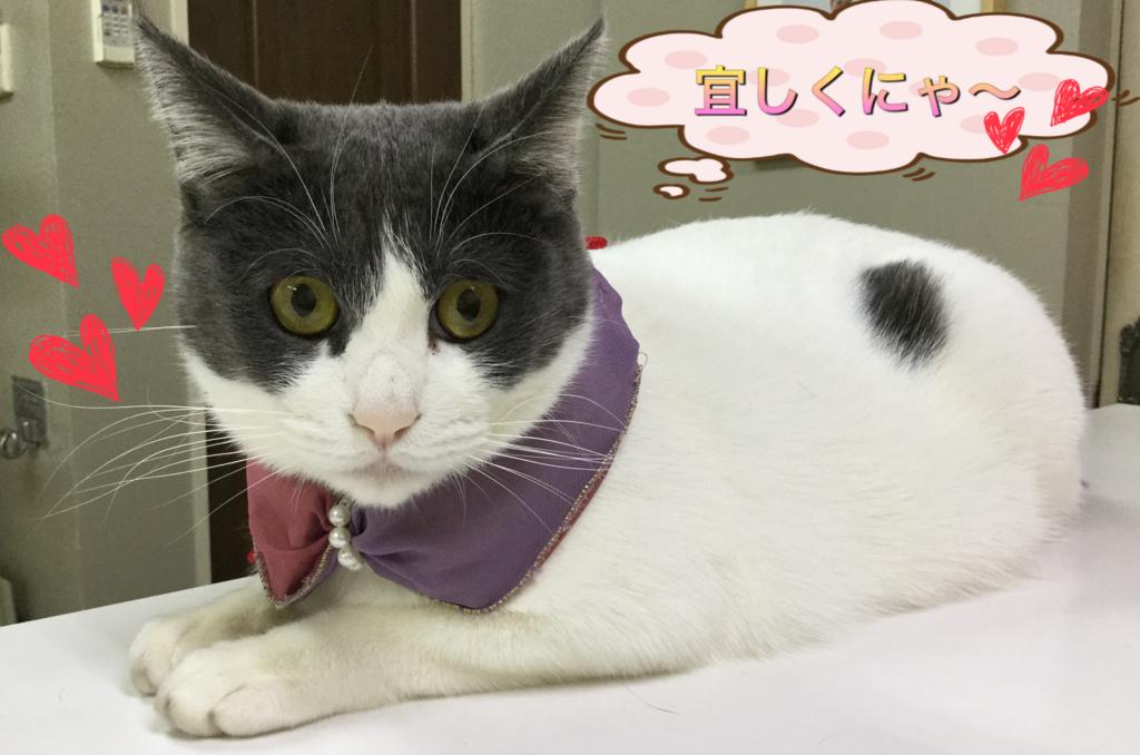 f:id:nozawa_clinic:20180411115255j:plain