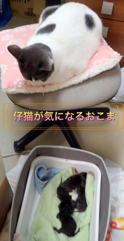 f:id:nozawa_clinic:20180418155513j:plain
