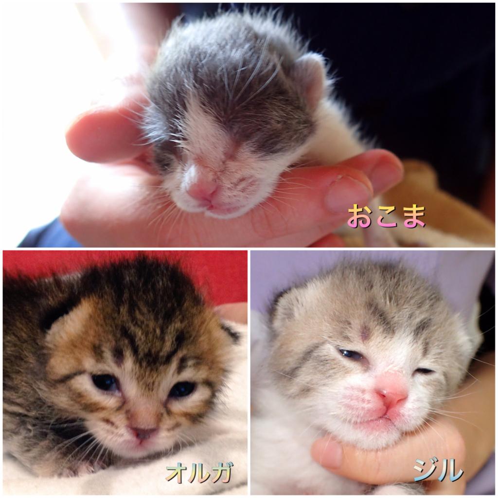 f:id:nozawa_clinic:20180427113551j:plain