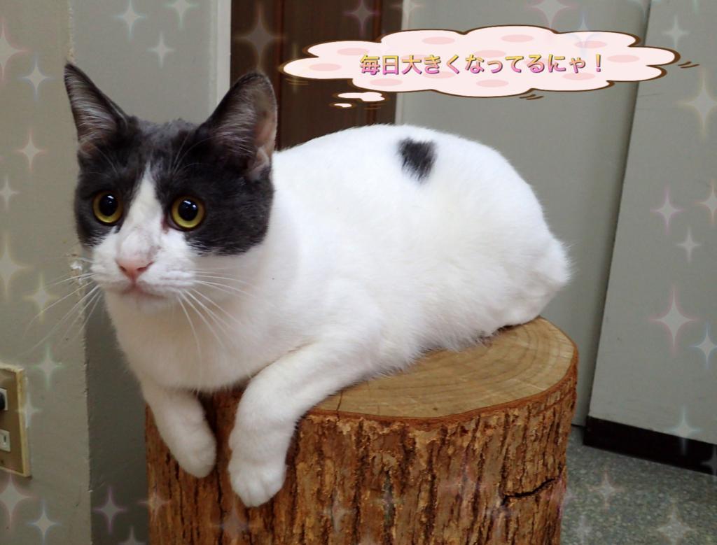 f:id:nozawa_clinic:20180509114755j:plain