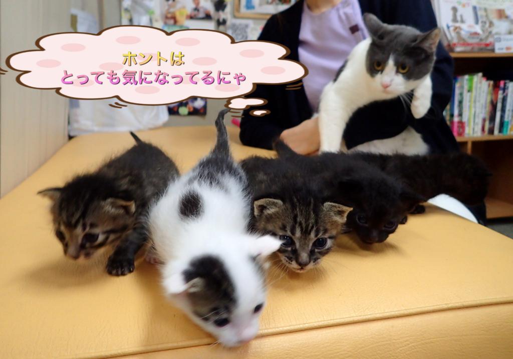 f:id:nozawa_clinic:20180509180423j:plain