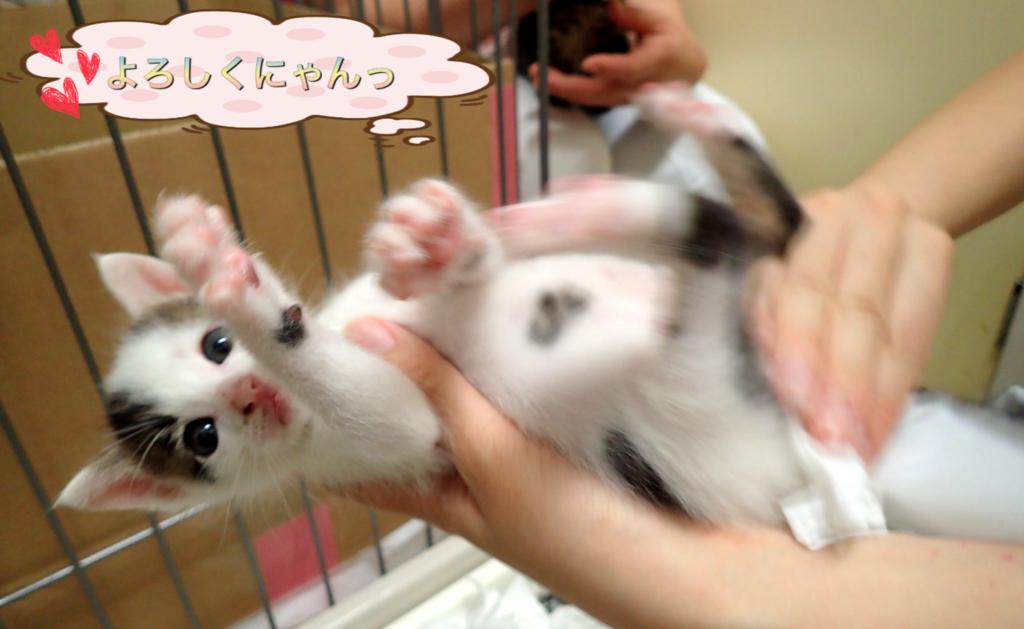 f:id:nozawa_clinic:20180517181425j:plain