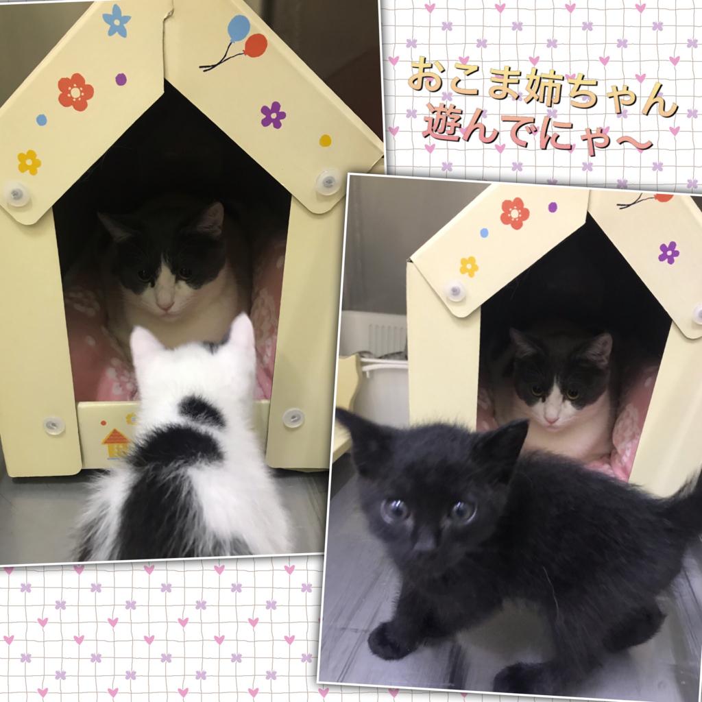 f:id:nozawa_clinic:20180602112700j:plain