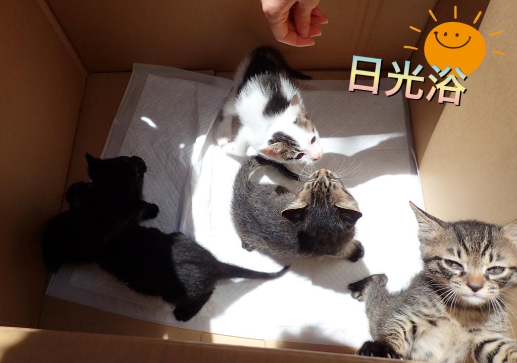 f:id:nozawa_clinic:20180602161242j:plain