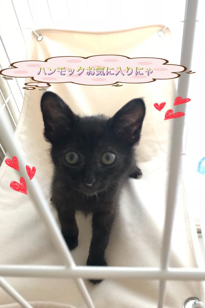 f:id:nozawa_clinic:20180622164509j:plain