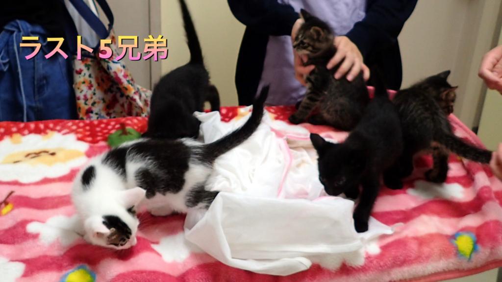 f:id:nozawa_clinic:20180713105449j:plain