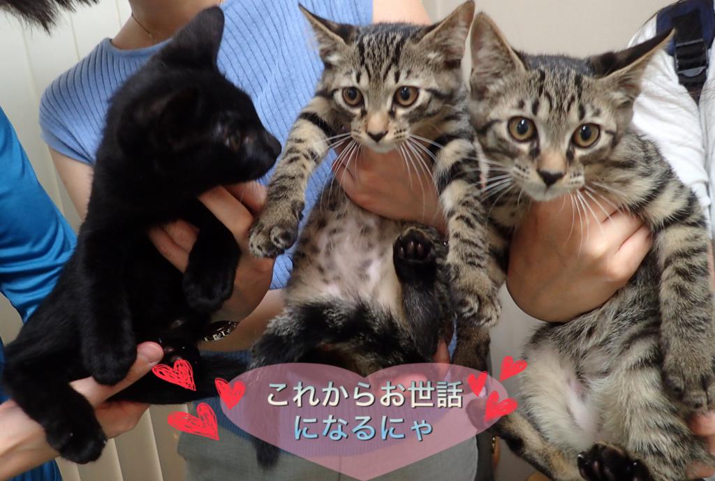 f:id:nozawa_clinic:20180713155943j:plain