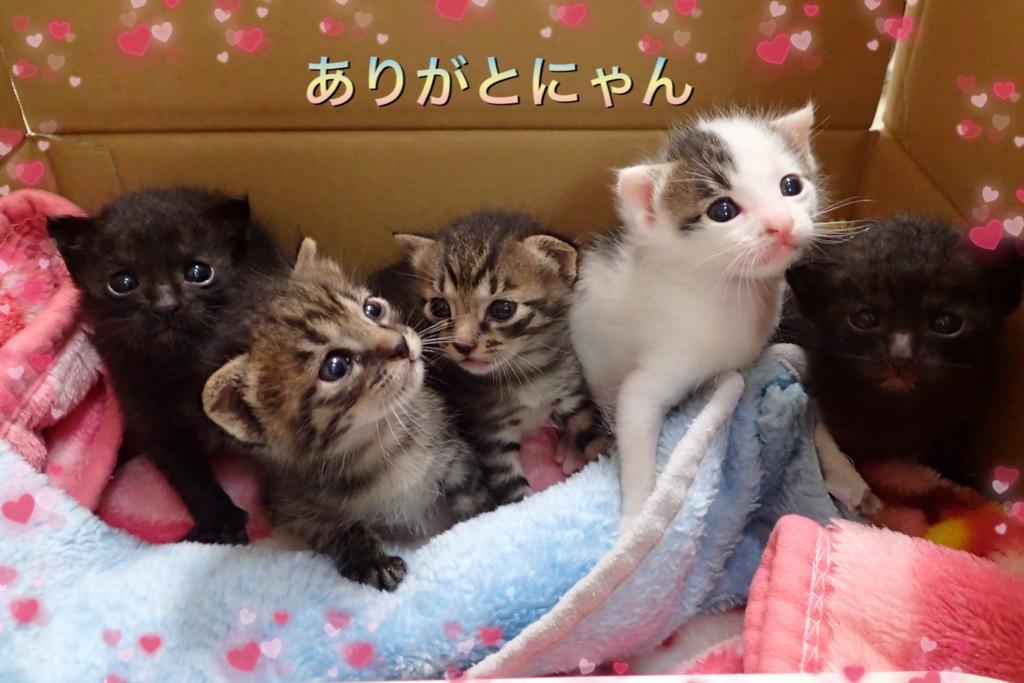 f:id:nozawa_clinic:20180713162701j:plain