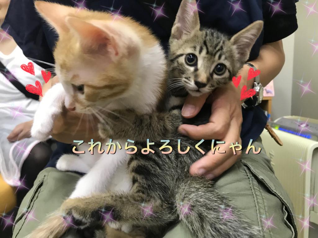 f:id:nozawa_clinic:20180806181446j:plain