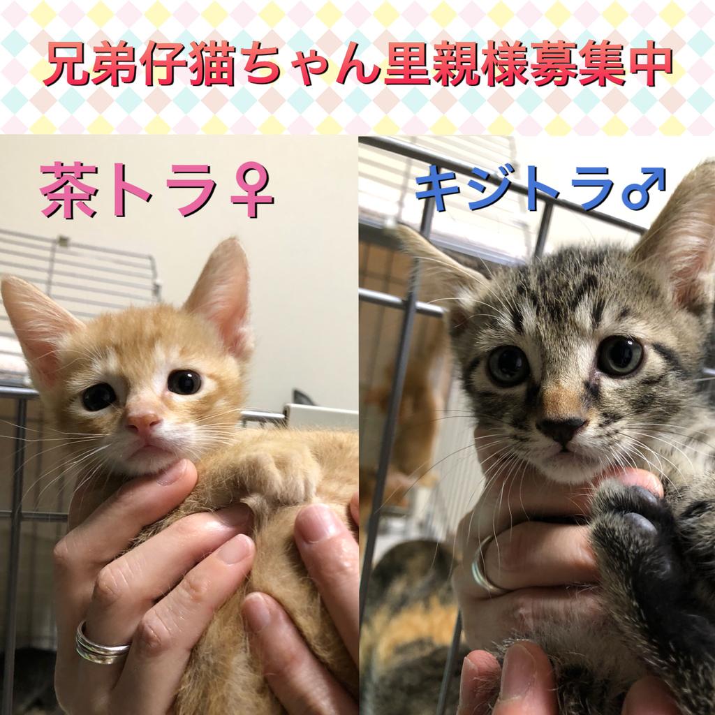 f:id:nozawa_clinic:20180830165154j:plain